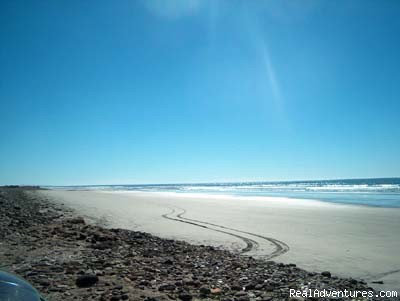 - Baja Mexico Adventure Road Trips and Eco-Travel