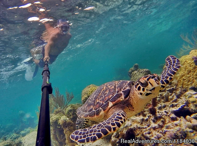 Snorkel with a turtle - Vacation Villas with BONEFISHING and DIVING
