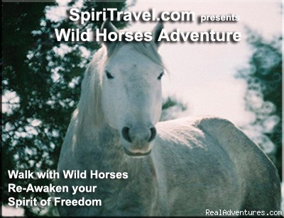 Young Wild Mustang Stallion - Spiritual Travel Adventures