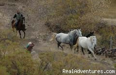 Round up - Horse trekking into the Andes