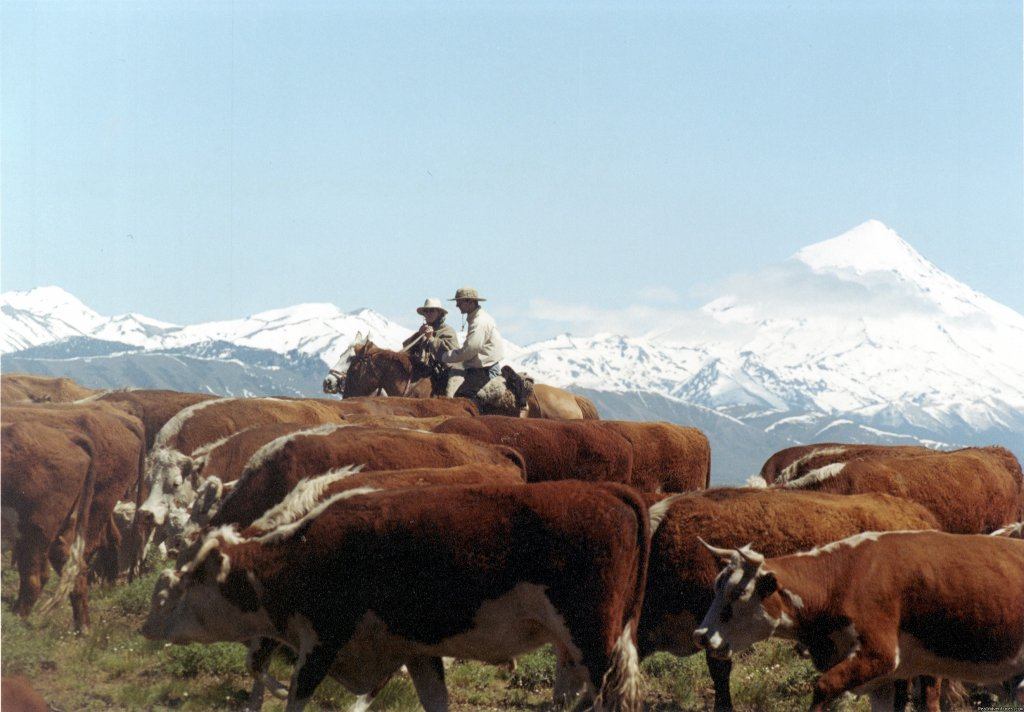 Estancia Huechahue is a working cattle ranch in Argentine Patagonia. Four generations of the Wood family have worked on the 15000 acres of Patagonian Steppe to produce a self-sufficient oasis and thriving cattle operation.