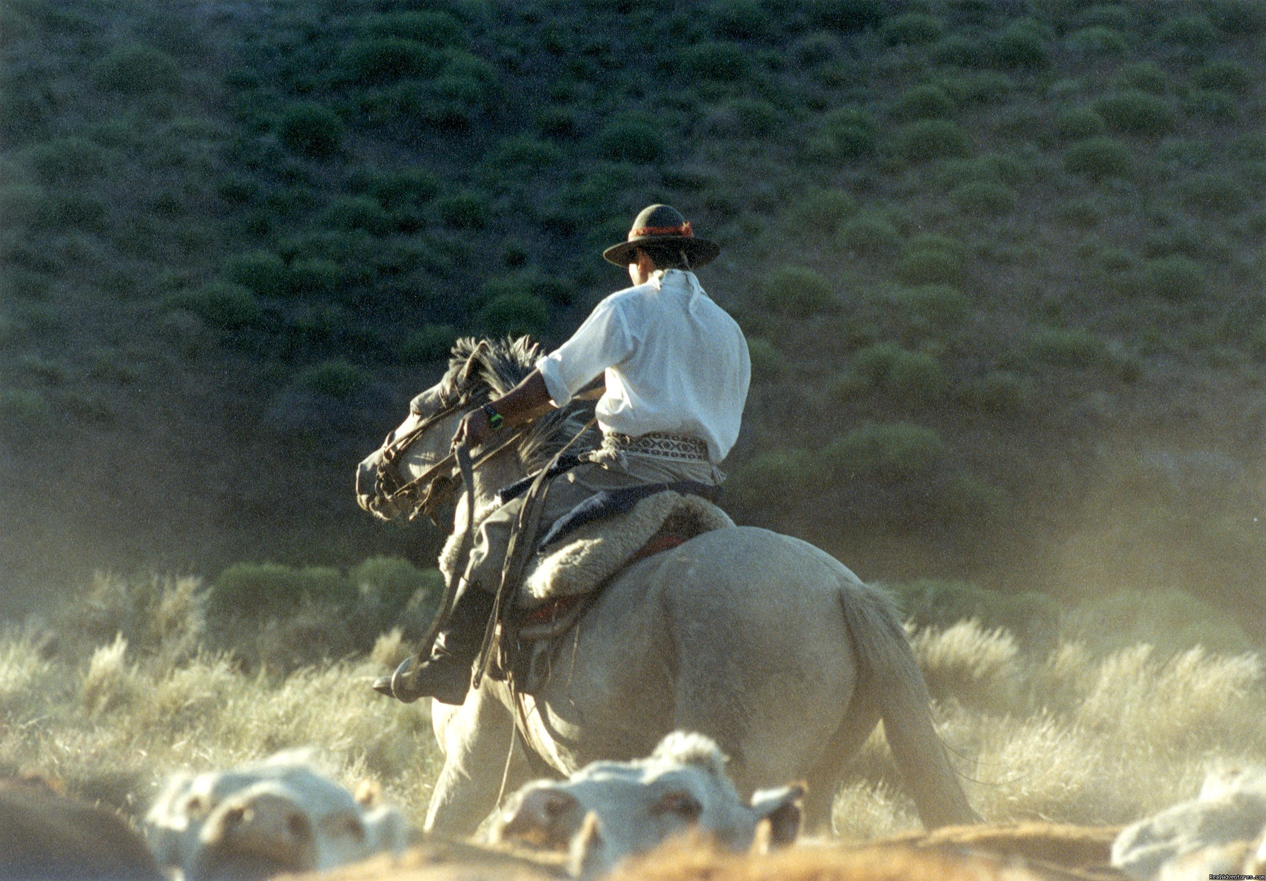 Argentine gaucho rounding up cattlr | Image #2/9 | Horseback riding