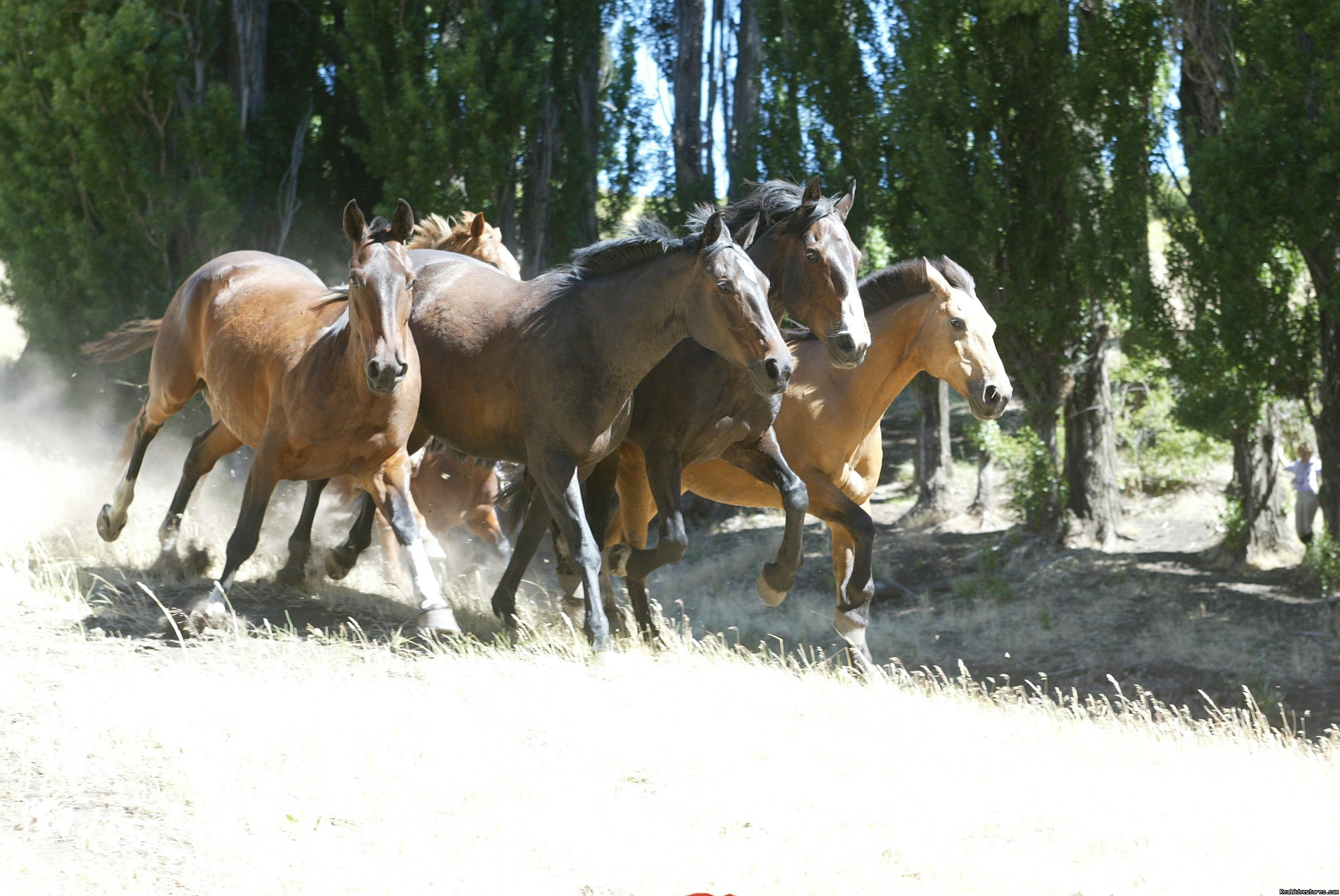 Our criollo horses | Image #8/9 | Horseback riding