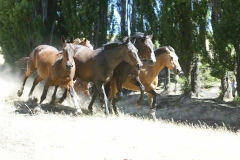 Our criollo horses (#8 of 9) - Horseback riding