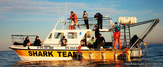Shark Team Boat - Shark Cage Diving in South Africa