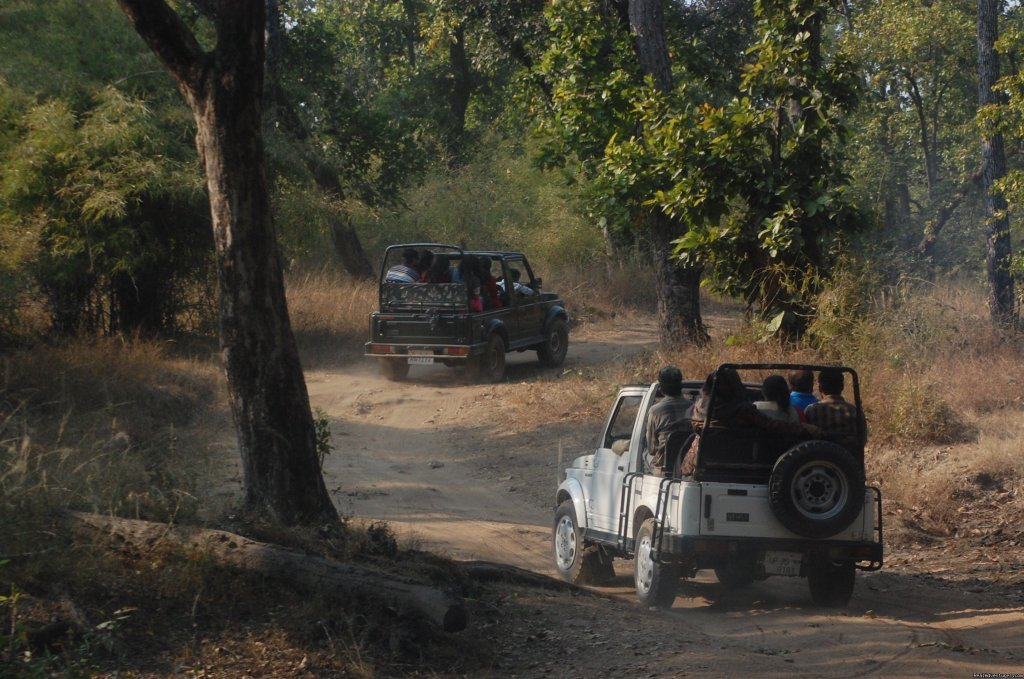 Jeep safari in national park | Image #2/17 | Mogli wildlife resort, Kanha and Bandhavgarh,India