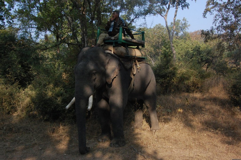 elephant safari | Image #6/17 | Mogli wildlife resort, Kanha and Bandhavgarh,India