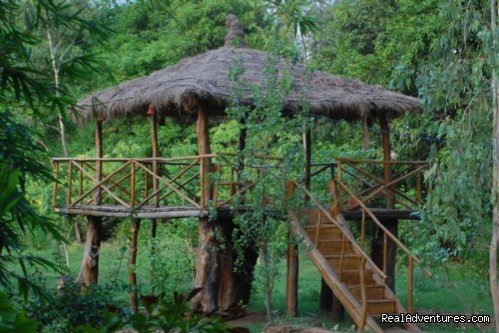 Image #15/17 | Mogli wildlife resort, Kanha and Bandhavgarh,India