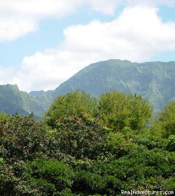 View of Hanalei Mountains from Lanai - The Orchid Room At Hale Moi