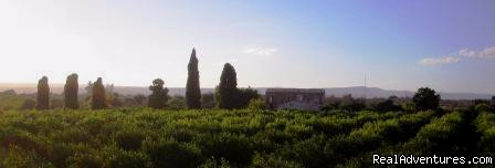 property view - La Frescura agriturismo, to find Sicily