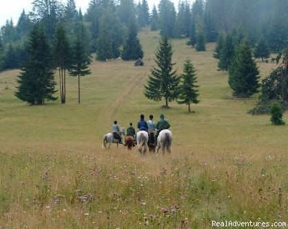 Riding Group in the Mountains - Horse Riding Trips at Calimani Equestrian Centre