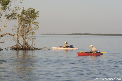 National Wildlife Refuge Kayak & Boat Tours