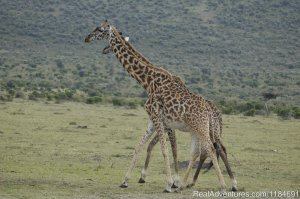 East Africa Vacation Holidays Nairobi, Kenya Sight-Seeing Tours
