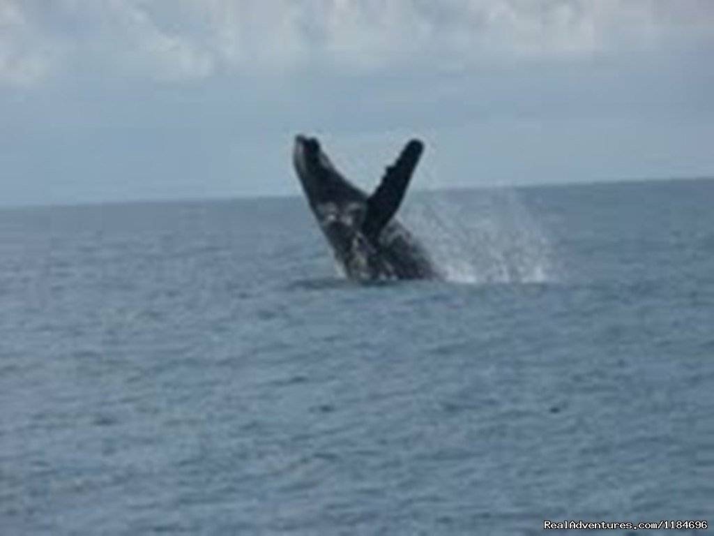 Whale watching between July and October | Image #6/6 | Brazil, Trancoso: apartment in golf condo at beach