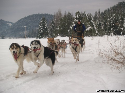 Dog Sled Tours and Classes -True North Expeditions: Happy Dogs