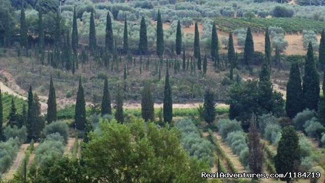 Southern Tuscany | Image #11/17 | Learn Italian in Tuscany @ Il Sasso