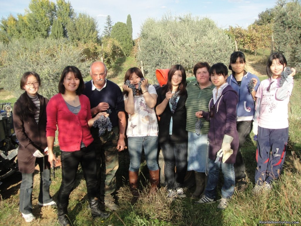 Grape harvest | Image #7/17 | Learn Italian in Tuscany @ Il Sasso