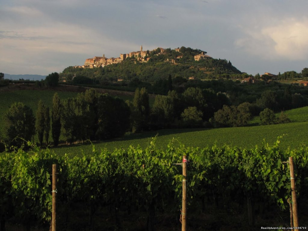 Harvest time | Image #12/17 | Learn Italian in Tuscany @ Il Sasso