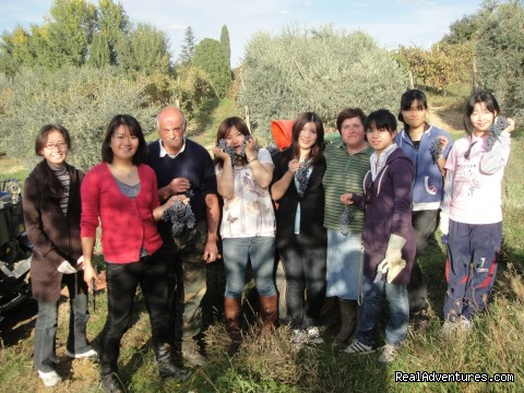 Grape harvest (#10 of 26) - Learn Italian in Tuscany @ Il Sasso