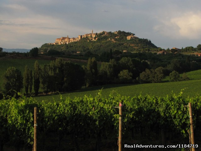 Harvest time - Learn Italian in Tuscany @ Il Sasso