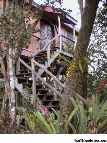Treetop Retreat Entrance Through Orchid-lined Sand Paths (#3 of 8) - Treetop Retreat- An Elemental Belizean Experience!