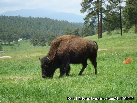Do Not Miss Buffalo Herd Overlook On The Way To The Cabin (#22 of 26) - Mt Evans Cabin, Hot Springs & Historic Town