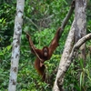 Borneo Kalimantan Tour Balikpapan, Indonesia Sight-Seeing Tours