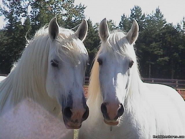Shangrila Guest Ranch Va Nc Horseback Riding South