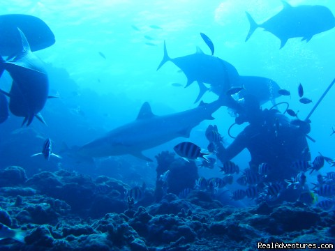 Shark Studies in Fiji - Broadreach College: Study Abroad in the Real World