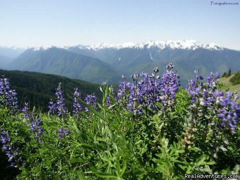 Wildflowers of the Olympic National Park - Authentic NW Nature, Wildlife, Wine & Active tours