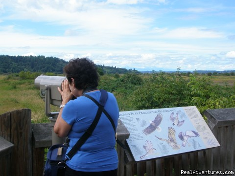 Bird watching at Nisqually Wildlife Preserve - Authentic NW Nature, Wildlife, Wine & Active tours