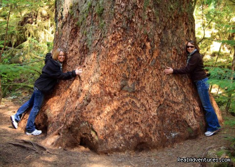 Escapists Hugging a Douglas Fir on the Olympic Peninsula - Authentic NW Nature, Wildlife, Wine & Active tours