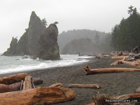One of Washington's many beautiful coastal beaches - Authentic NW Nature, Wildlife, Wine & Active tours