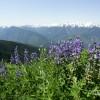 Authentic NW Nature, Wildlife, Wine & Active tours