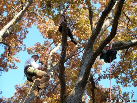 ACTIVE: Climbing Trees: Recreational Tree Climbing