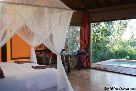The Bush Lodge Port Elizabeth, South Africa Wildlife & Safari Tours