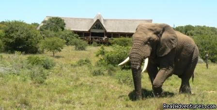 Image #8 of 11 - The Bush Lodge