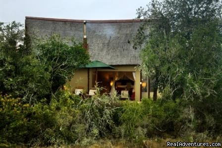 - The Bush Lodge