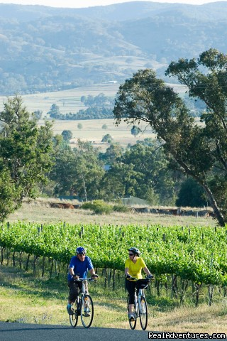 Cycling tours and holidays with Green Pedal Tours: Cycling through wine country