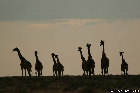Kruger Park Safaris Benoni, South Africa Wildlife & Safari Tours