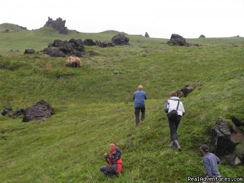 Hunting with a camera - Kamchatka - hot land at the cold sea.
