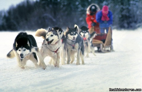 Algonquin Dog Sled Adventures (#1 of 1) - Algonquin Dog Sled Adventures