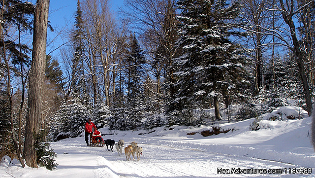 Dog Sledding Algonquin Reviews