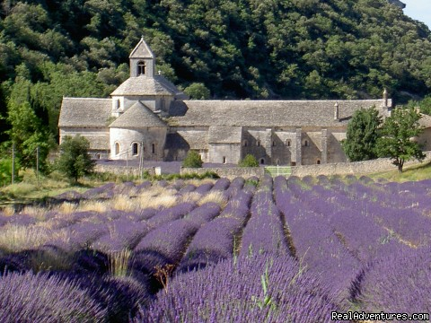 Abbey of Senanque - Sightseeing tours in Provence