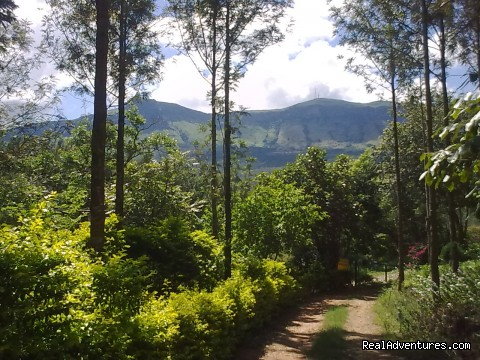 Giri View from Deivigiri Homestay Chikmagalur (#5 of 25) - Jungle camping Devigiri Coffee Estate Chikmagalur