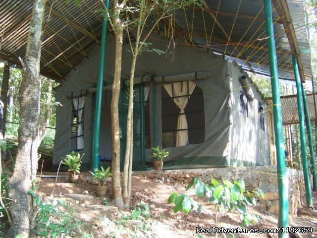 Jungle Cottage/camp/tent in Devigiri Chikmagalur (#8 of 25) - Jungle camping Devigiri Coffee Estate Chikmagalur