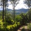 Giri View from Deivigiri Homestay Chikmagalur