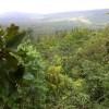 Jungle stay Devigiri homestay Chikmagalur