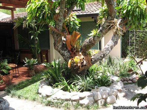 Mango tree (#2 of 18) - Tierra Magica B&B