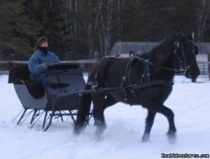 Horse Drawn Sleigh Rides & Carriages Rides  Big Falls, Minnesota Horseback Riding